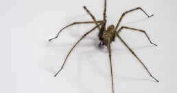 pest-control-how-to-get-rid-of-spiders