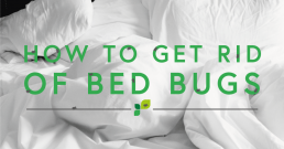 how-to-get-rid-of-bed-bugs-treatments